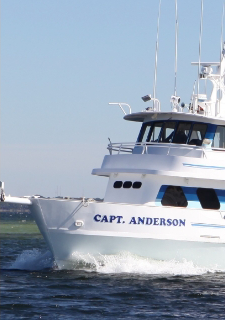 Book a Deep Sea Fishing trip in Panama City beach Florida with Capt Anderson's Marina