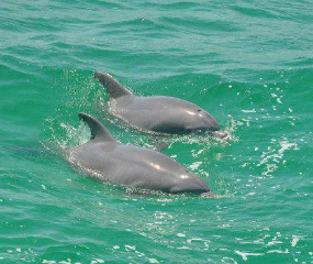Book a shell island boat trip & dolphin encounter in Panama City, Florida with Capt Anderson's Marina